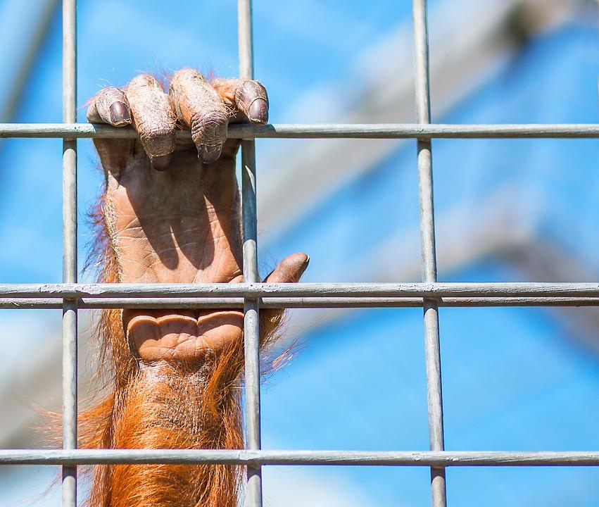 monkey-1187335_960_720